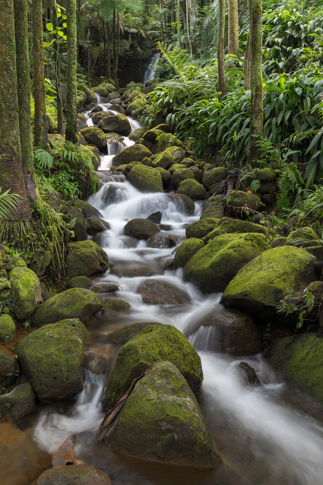 In this photo, a beautiful stream makes its way through a palm tree forest. The lush greenery and moss-covered rocks make this...