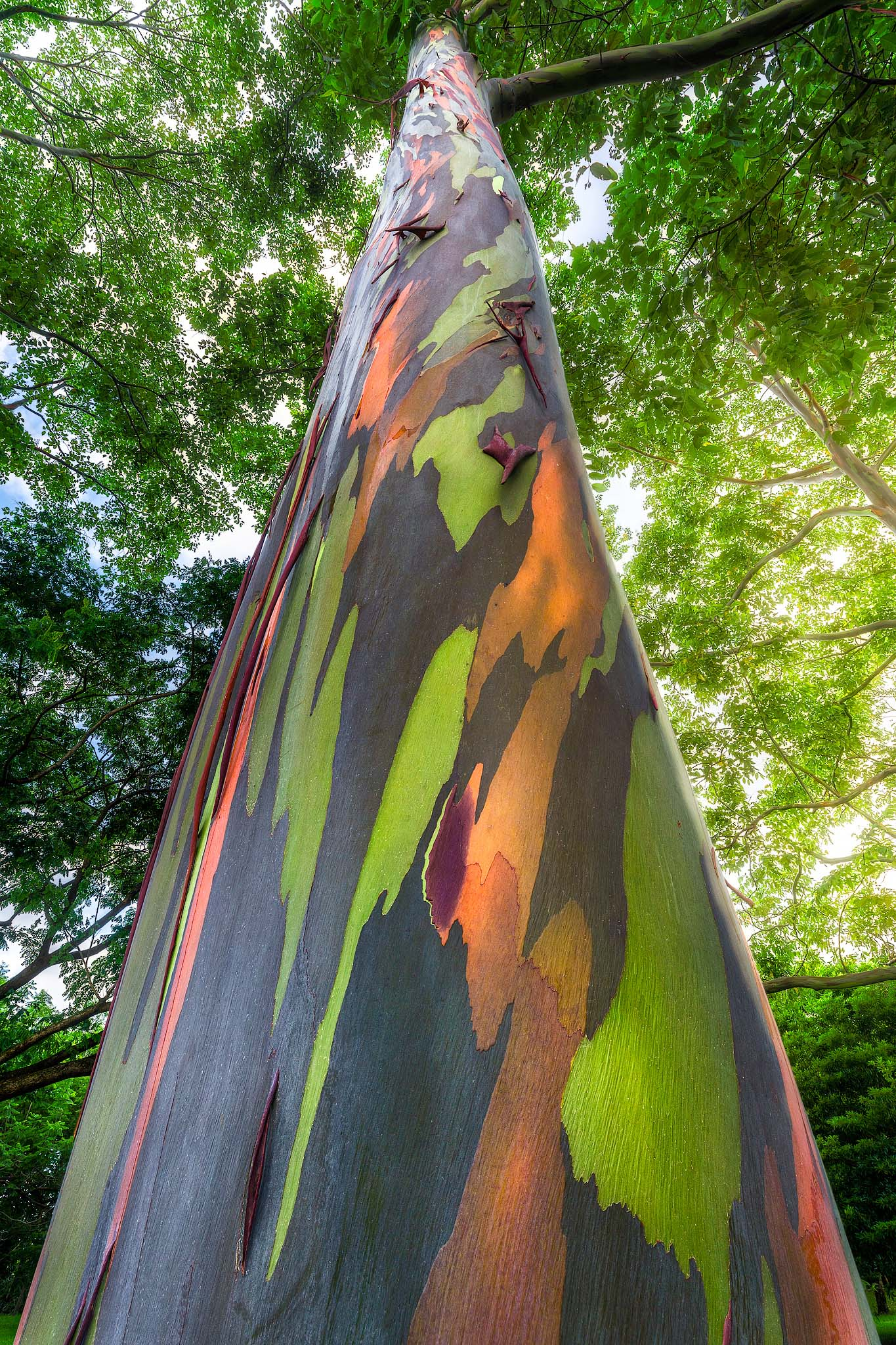 Although they are not native to Hawaii, there are some amazing trees with unbelievable colors scattered throughout the islands...
