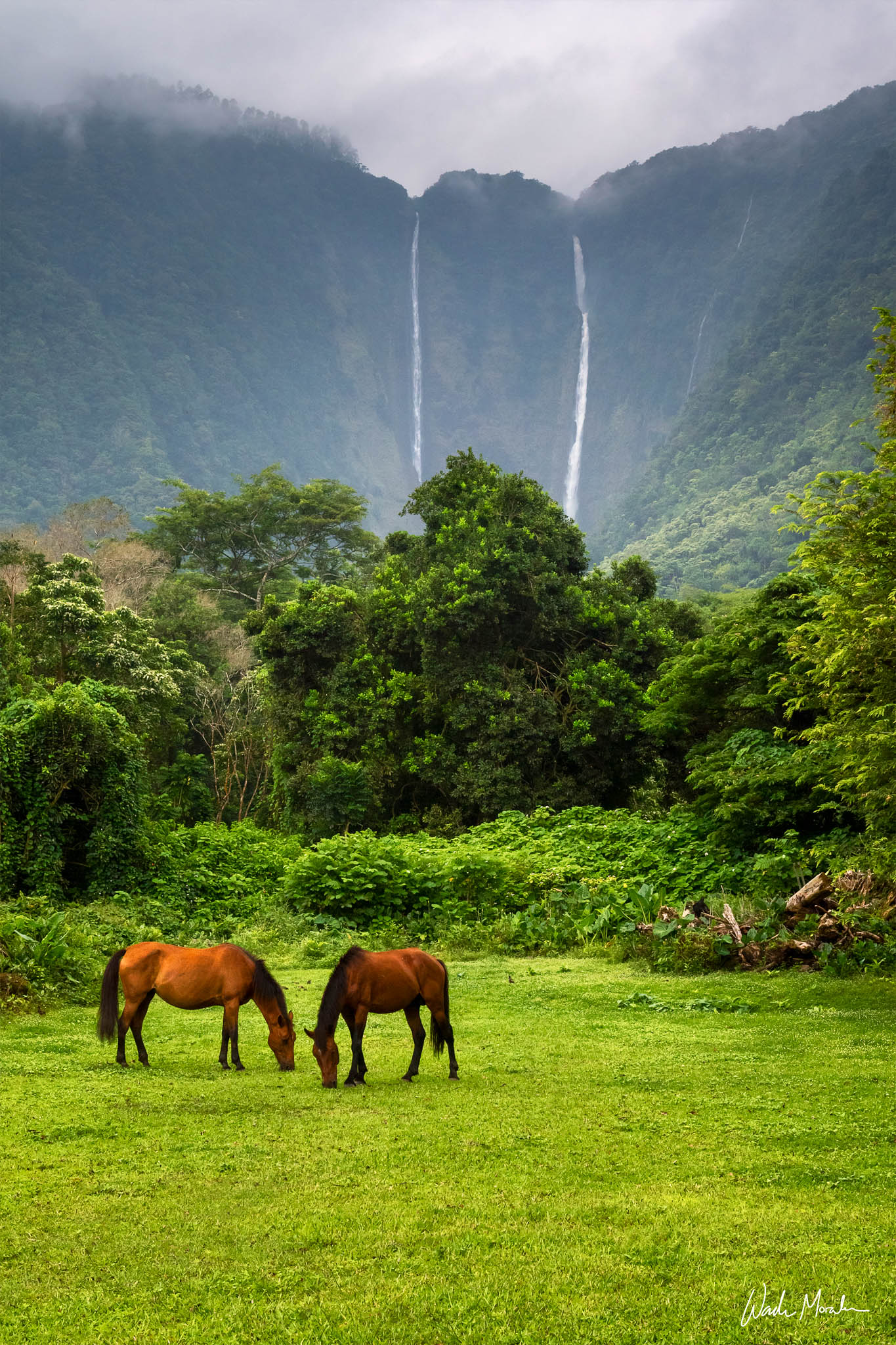One of the most beautiful places on earth is Waipiʻo Valley. I feel so fortunate to have had the opportunity to visit this sacred...